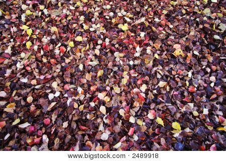 Many Colors Of Fallen Leaves