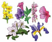 image of lyre-flower  - A set of 6 ink hand - JPG