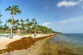 Punta Cana, Dominican Republic - June 25, 2018: : sargassum seaweeds on ocean beach in Bavaro, Punta poster