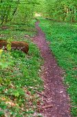Path In Green Forest In Spring, Forest Path Between Trees In Summer poster