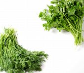 Bunch Of Dill And A Bunch Of Parsley On A White Background. Space For Text. Flat Top View poster