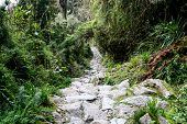 Stone Steps Of The Inca Trail To Machu Picchu In The Wildness. Beautiful Wallpaper. poster