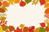 Fallen Gold And Red Autumn Forest Leaves. October Nature Leaf Border Vector Abstract Background. Lea poster