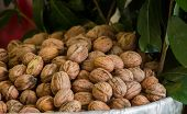 Pile Of Whole Fresh Walnuts With Hard Nutshells poster