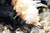 stock photo of rabies  - scary scene a grave for dead infected dogs - JPG