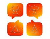 Tree, Oak-tree And Christmas Tree Icons. Forest Trees Linear Signs. Orange Speech Bubbles With Icons poster