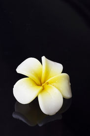 stock photo of single flower  - A Flower Candle Isolated On Black Background - JPG