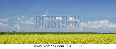 Farm Of Windturbines Close To Rape Field