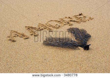 Amore At Beach