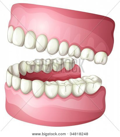 illustration of denture on a white background
