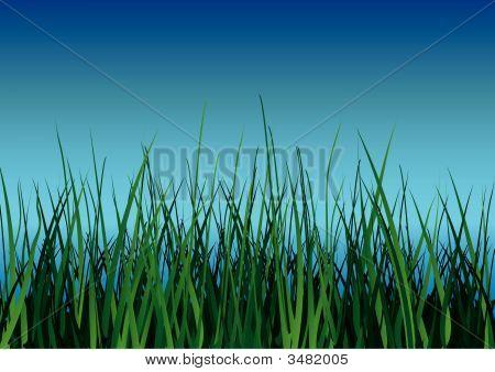 Green Grass On Blue Sky Background.