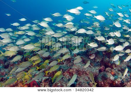 Fish over a reef