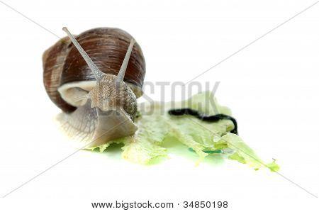Snoopy Snail