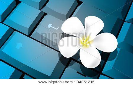 Flower on keyboard