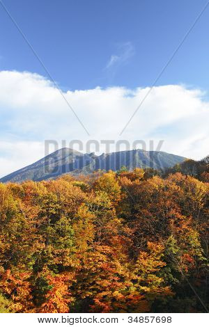 Colorful  Leaves And Mt.iwate
