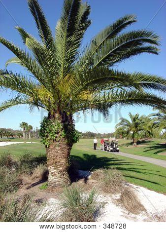 Palm Tree Golfers