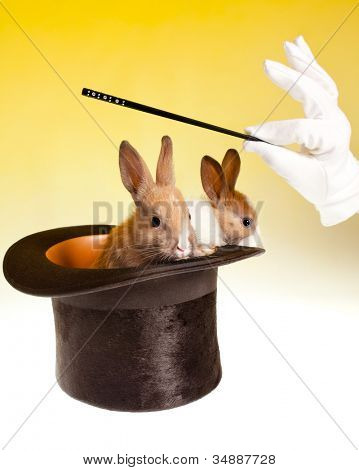 Magic wand and magician's hand with two rabbits coming out of a black top hat