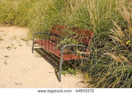 Overgrown Park Bench