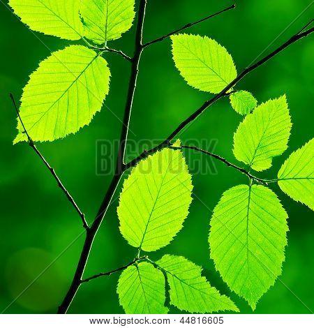 Green foliage in the morning sun beams