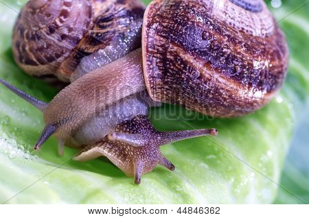 Love Between Snails