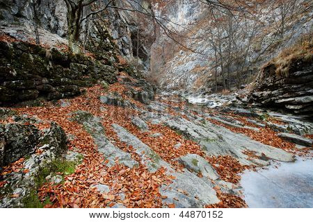 Autumn landscape in the Occidental Carpathians, Romania