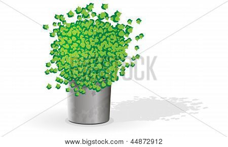 Green flower in the pot