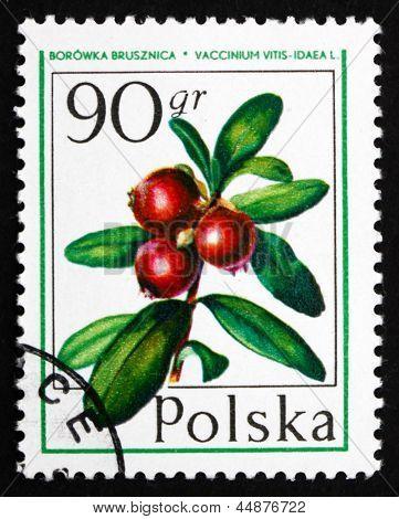 Postage Stamp Poland 1977 Cranberry, Forest Fruit
