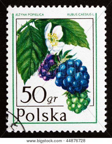 Postage Stamp Poland 1977 Dewberry, Forest Fruit
