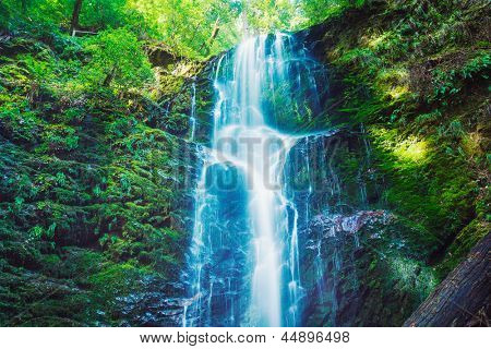 Beautiful Waterfall, Lush Waterfall in Forest