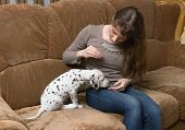 stock photo of spotted dog  - Girl training a little puppy spotted dogs - JPG