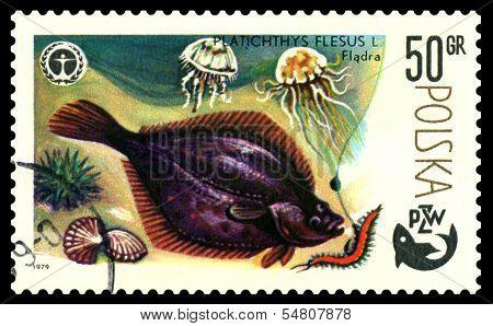 Vintage  Postage Stamp. Fish  Flounder.