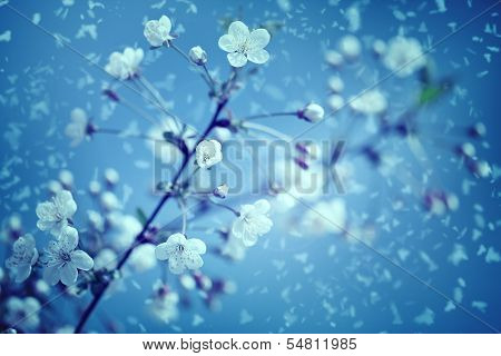 Snow And Flowers. Abstract Environmental Backgrounds