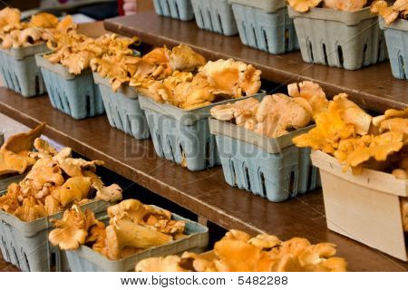 Chanterelle Mushrooms In Cartons