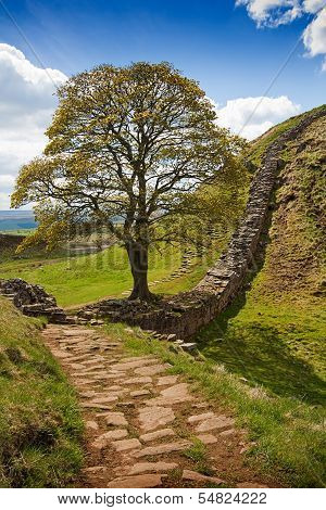 Sycamore Gap On Hadrian's Wall