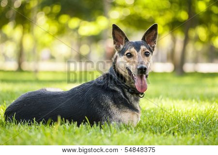 Portrait Of Mixed Breed Black Dog Lying On The Grass