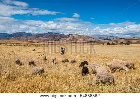 MORAY, PERU - JULY 23: woman shepherd in the Peruvian Andes at Cuzco Peru on july 23, 2013. Moray is located approximately 50km northwest of Cuzco on a high plateau at about 3500masl