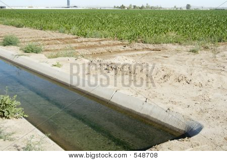 Irrigated Corn 5