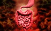 picture of digestion  - Digital illustration of human digestive system in colour background - JPG