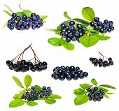 foto of aronia  - Isolated Aronia  - JPG