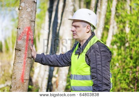 Lumberjack near marked tree in forest