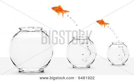 Two Goldfish Jumping To Bigger Fishbowls