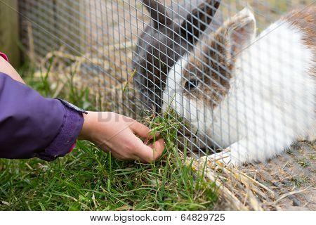 Kid Feeding Rabbit