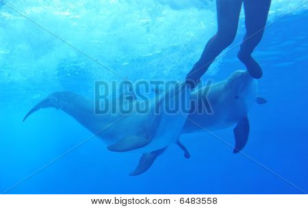 Dolphins Playing With Man
