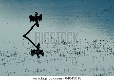 Silhouette of an African darter (Anhinga rufa) sitting with open wings, South Africa