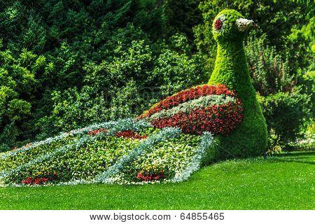 Colorful Bird of many flowers on Flower Island Mainau, Lake Constance, Germany