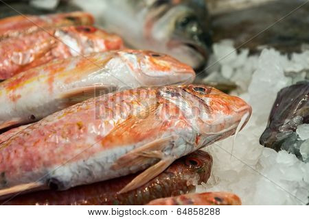 Fish Ans Seafood