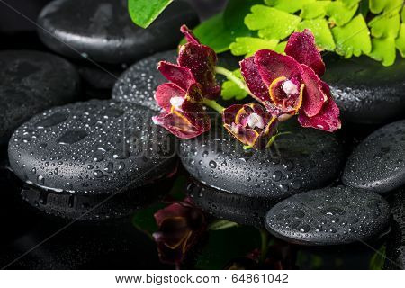 Spa Setting Of Zen Stones With Drops And Blooming Twig Of Dark Sherry Orchid (phalaenopsis ) With Re