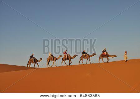 Camel Caravan In Merzouga Desert, Morocco
