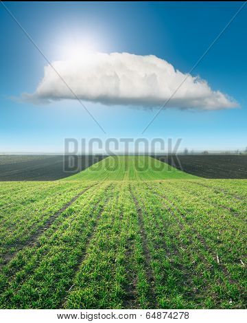 Waved Young Wheat Field At Sunny Day