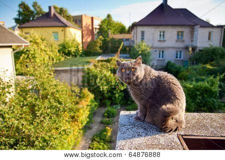 British Cat Watching A Bird